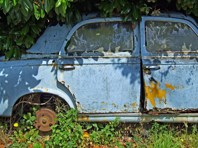 Old rusty Renault burried in the bushes