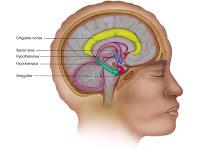 Brain Hippocampus1