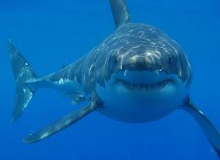 Tiburón en el agua