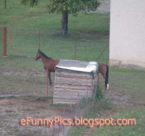 Strange Animals - A Strange Horse