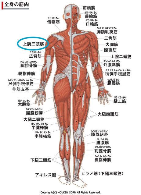 上腕 三 頭 筋 上腕三頭筋の効果的な鍛え方|二の腕を太くする筋トレの方法とは