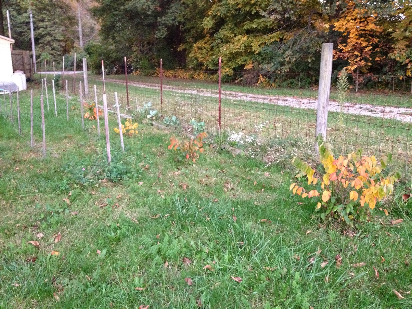 little country house: Fall Colors And Fairy Rings