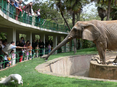 Welcome to The Bunch of Interesting Articles!: Going Out to The Zoo  Zoo