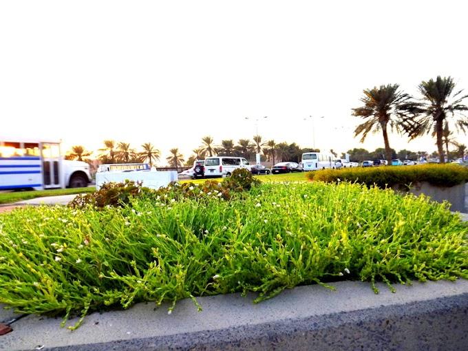 Doha Corniche beautiful Grass