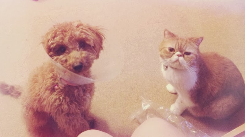 do cats and dog get on, photo of cat and dog