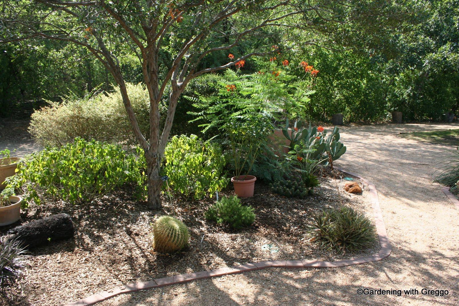 Gardening With Greggo Xeriscape Post San Antonio Part Four