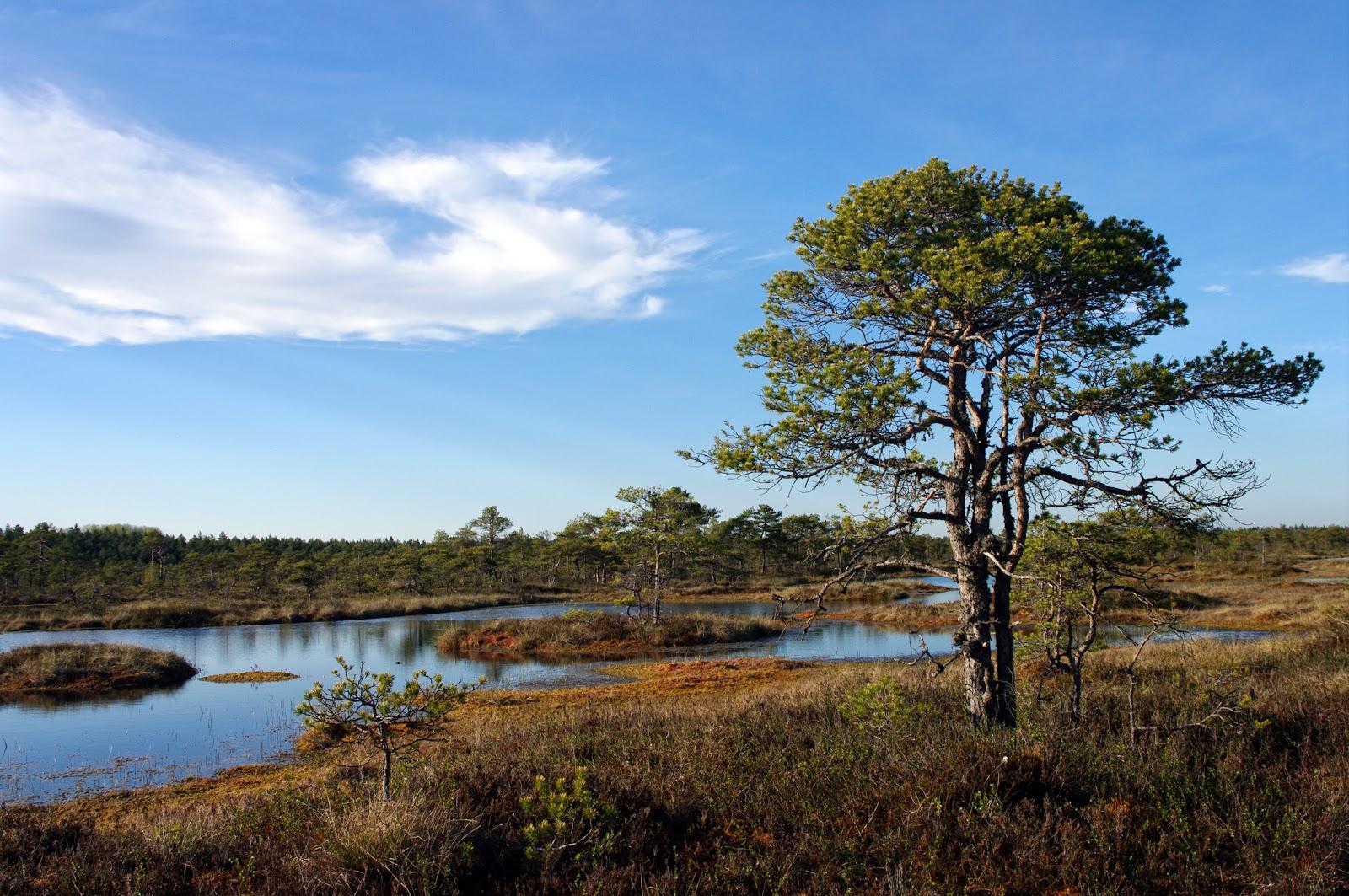 Kakerdaja raba Kõrvemaa Kalev Vask Eesti loodus Estonian Estonia nature photography bog swamp matkarada loodusrada Järvamaa