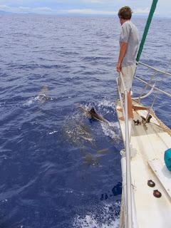 Delfine vor dem Bug