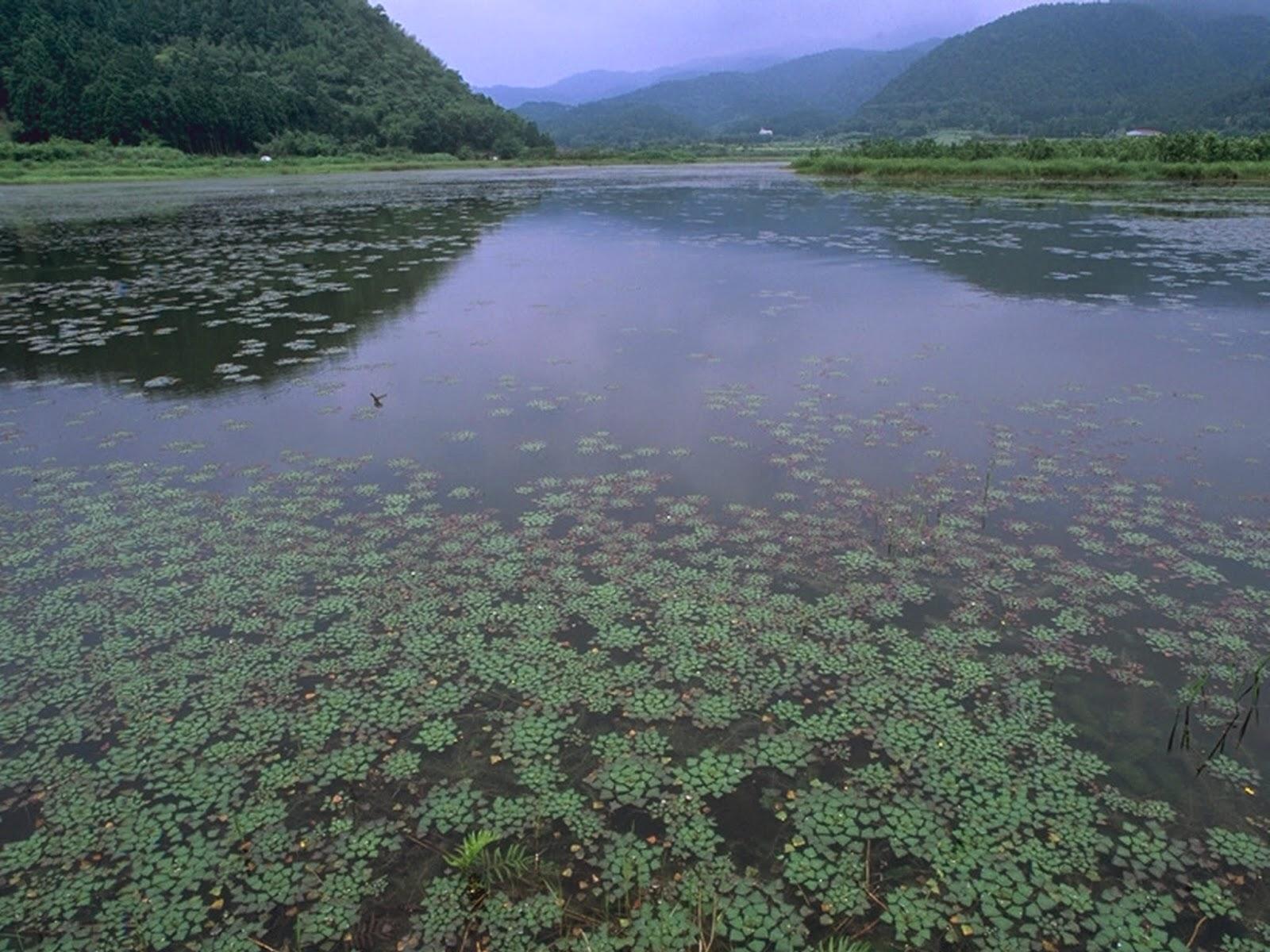 水面上遍布水生植物