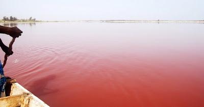 Danau Milkshake Stroberi