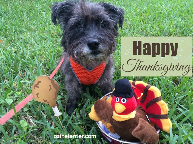 Oz the Terrier wishes you and yours a very Happy Thanksgiving