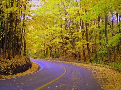 wallpaper nature green. Desktop Nature wallpaper: best