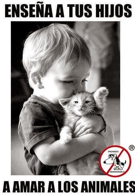 Los animales no son un juguete