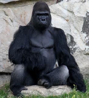 binatang terbesar di dunia