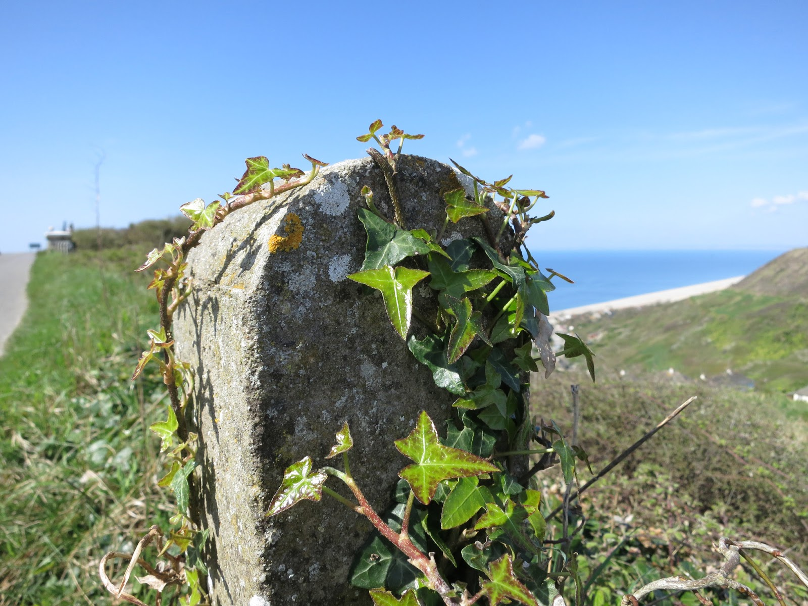 Low stone post with ivy growing up it.