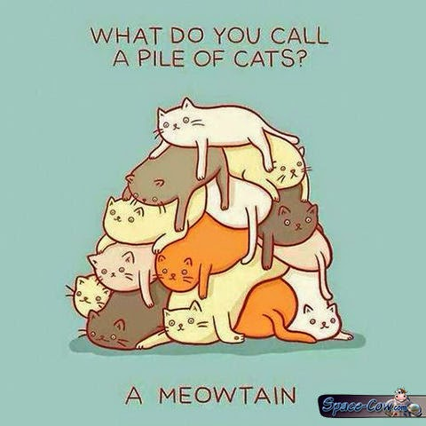 funny comics cats humor