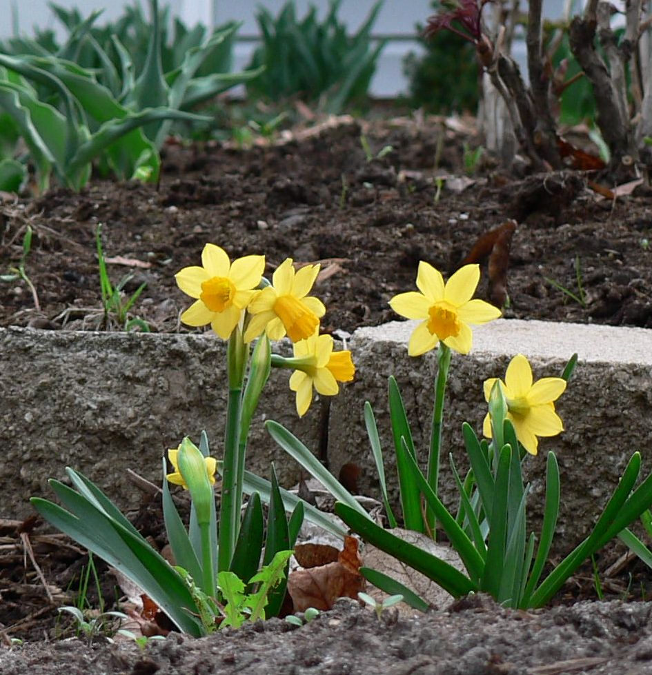 early spring flowers pictures - photo #16