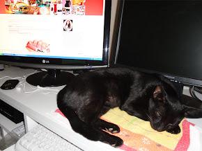 Quem me faz companhia enquanto blogo: meu neguinho, o Robinho!!