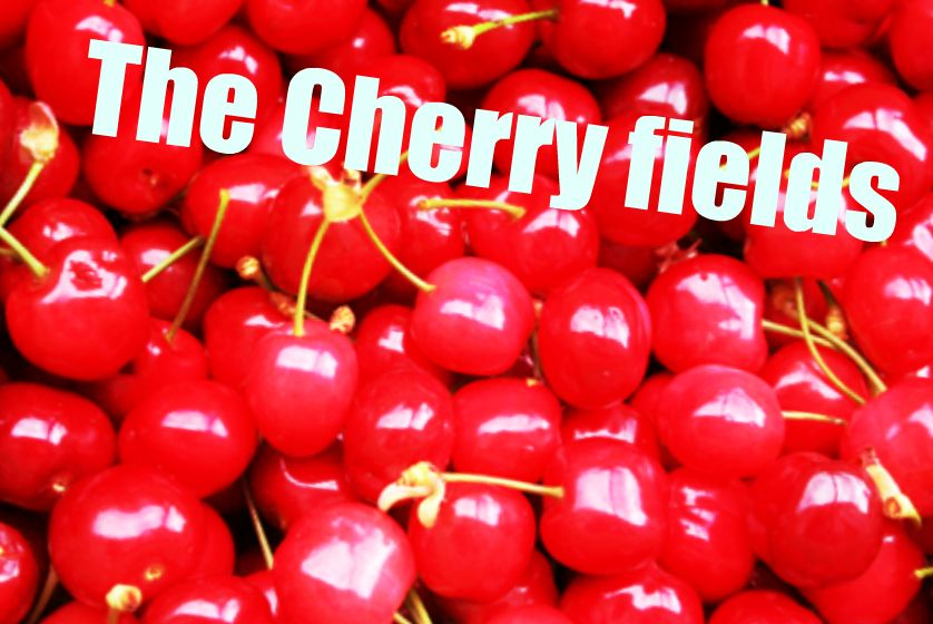 The Cherry Fields