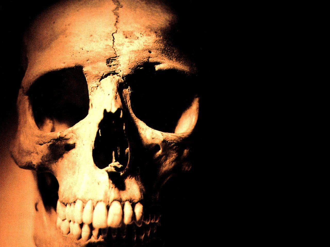 25 Abstract Poker Skull HD Wallpapers 20122013 | Galerry Wallpaper ...