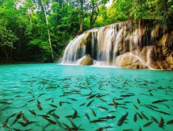 Waterfall and Cute Fish Swimming