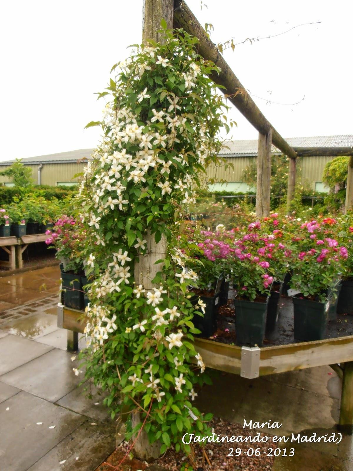 El jard n de la alegr a david austin roses garden en albrighton inglaterra el garden center - Garden center madrid ...