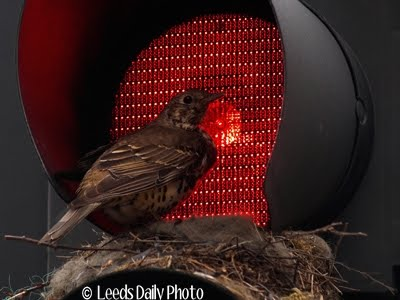 Bird Nest Traffic Lights Leeds