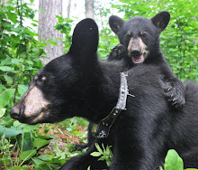 ~Fun With Bears~