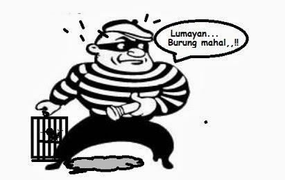 http://www.gudangburung.com/