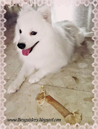 Prince Royale - Our Japanese Spitz