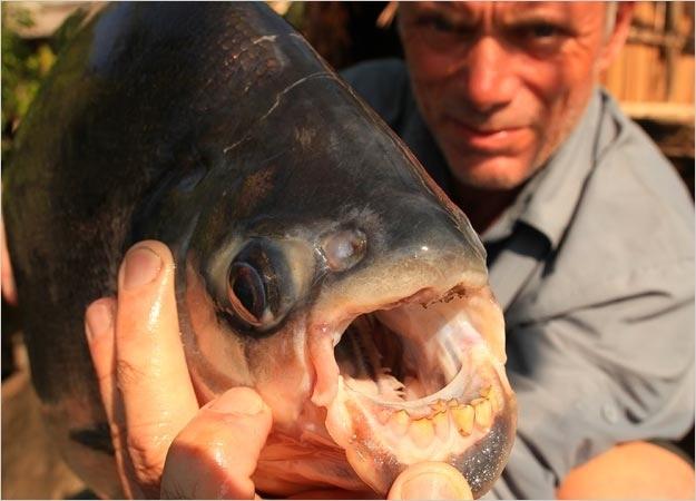 Fish fishingtheusaandcanada fish 21 of the freakiest for Skin eating fish