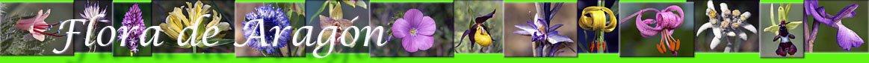flora-aragon/enlaces