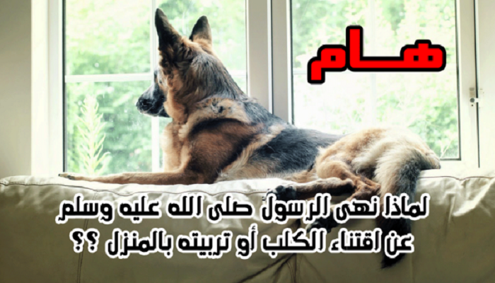 لماذا نهانا الرسول عن اقتناء كلب أو تربيته...حفظوها لأبنائكم