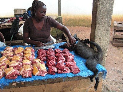 Biadab ! Disini Monyet Dibantai Untuk Dikonsumsi Dagingnya [ www.BlogApaAja.com ]