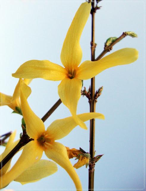 zuti cvjetovi