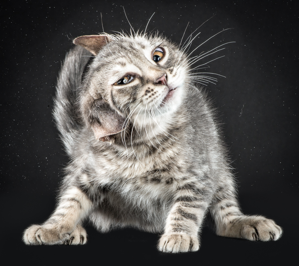Котики отряхиваются от воды (13 фото)