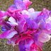 Colorful Flowers hd images