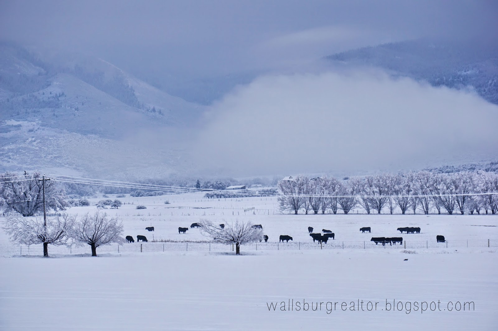 Snow Covered Fields in Wallsburg