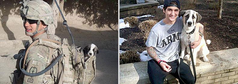 animales recrean imágenes de sí mismos cuando eran más pequeños