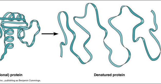 denaturing proteins Denaturation of proteins is a reversible—and sometimes irreversible—process that involves the disruption and possible destruction of both the secondary and tertiary structures.