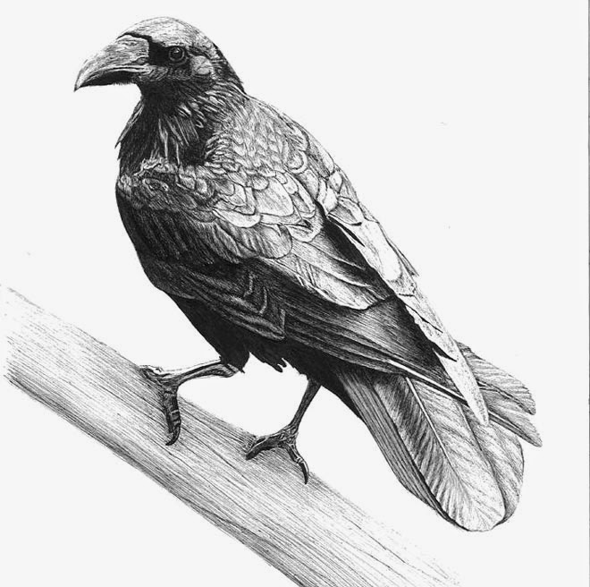 25 best bird drawings for your inspiration fine art and