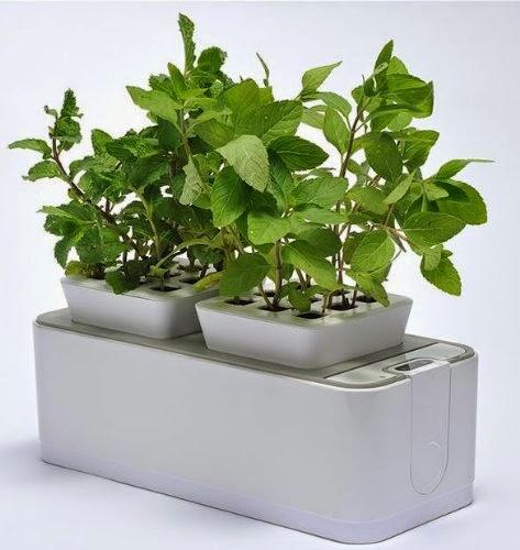Self-watering Hydroponics