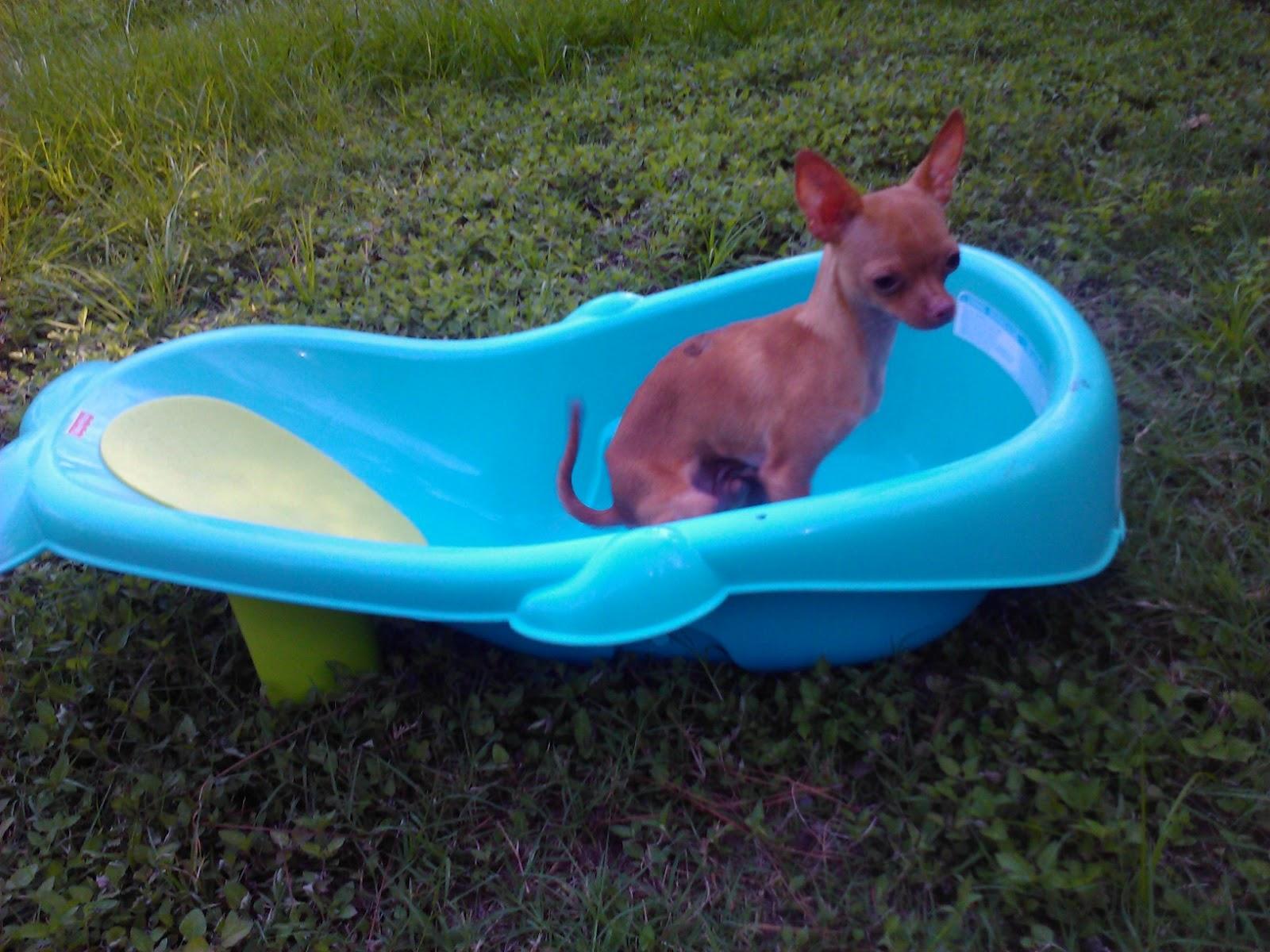 petstuffresale.blogspot.com: Dog items/TALL cat tree in at Houston\'s ...