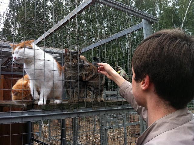 Лесной приют для животных Подмосковье Бодрово