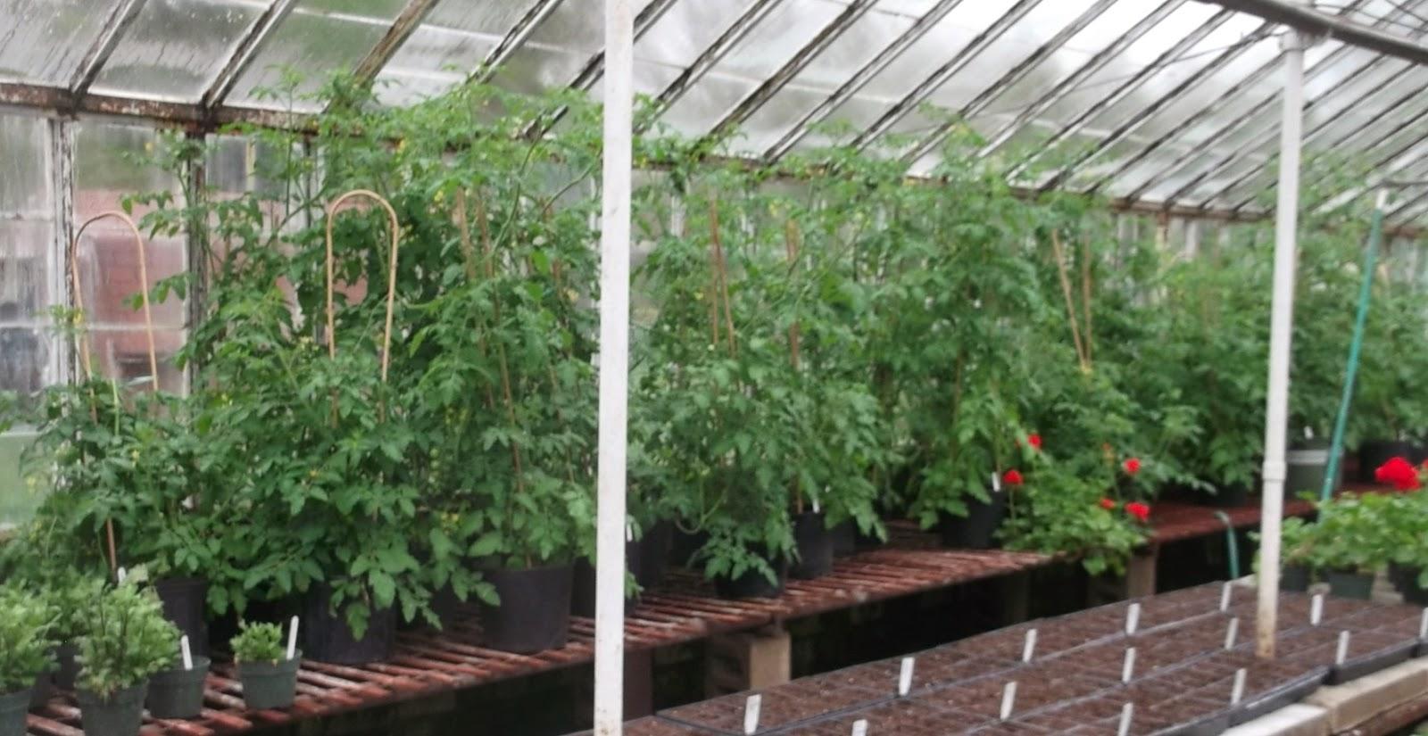 Flower Garden Eaton Rapids Michigan: Eaton Rapids Joe: Hastay's Greenhouse And Flower Shop