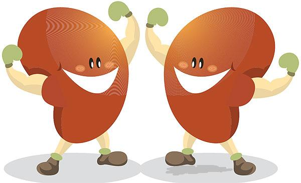 Great Foods that Produce Healthy Kidneys