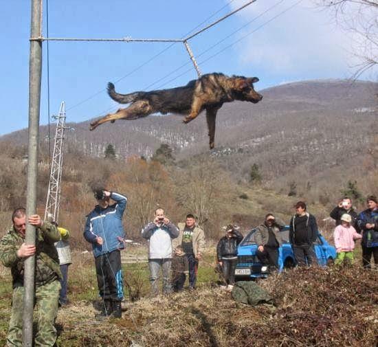 هل تعلم لماذا يقع تعذيب هذا الكلب بتلك الطريقة النكراء