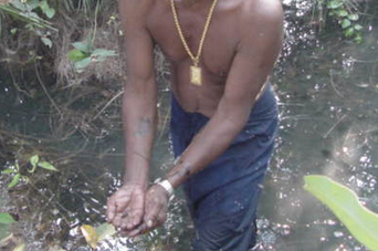 Pencarian bibit Ikan CUPANG LIAR