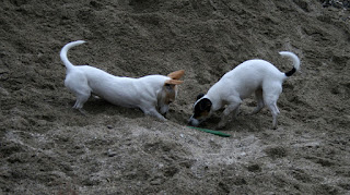 Playing in the sandpit with a chunk of wood