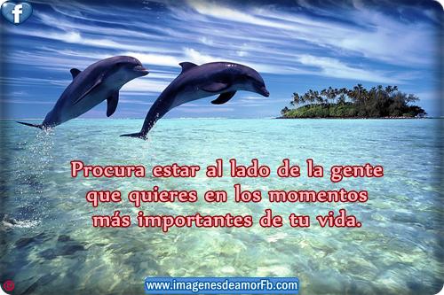Tarjetas de amor con delfines - Imagui